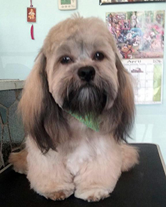 Pet Grooming Dallas TX